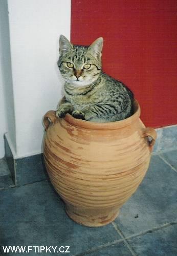 Těsné teen kočička rty